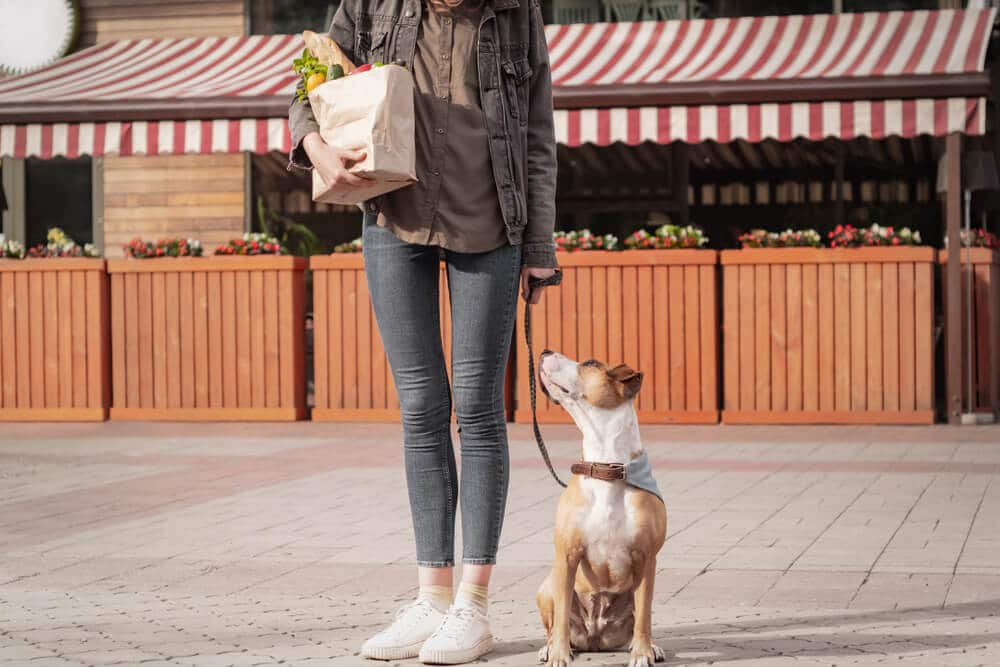 Woman with a dog and a grocery bag