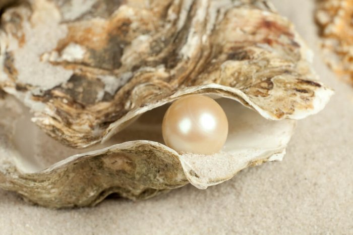 A pearl inside an oyster